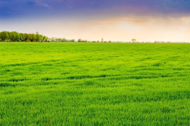 日没時に明るい緑の草のある広々としたフィールド
