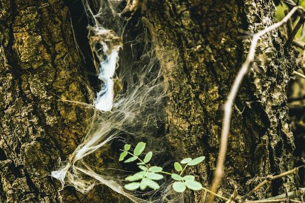 スペインの自然樹皮テクスチャ円形カディス