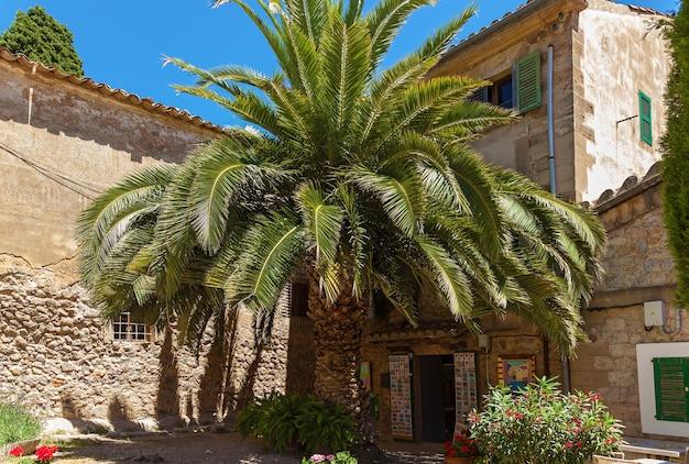 Spain palma de mallorca june 23, 2016: green palm tree near the stone house of spain palma de mallorca,