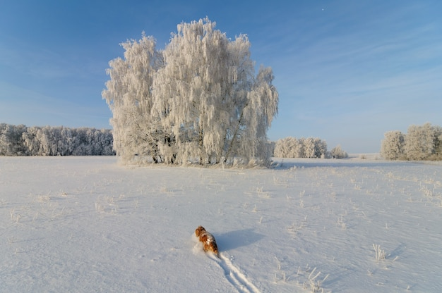 凍るような晴れた日に美しい冬の風景を散歩するスパニエル犬