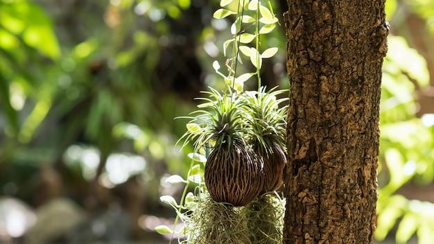 Spanish moss hanging plant decoration