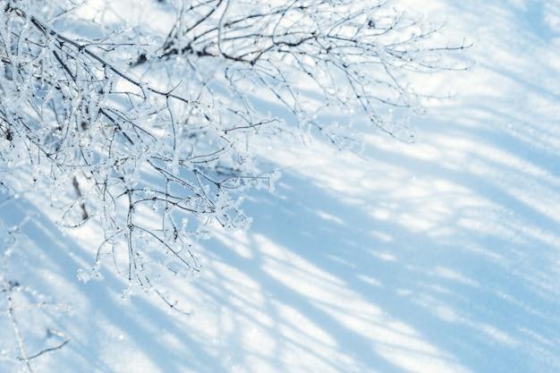 晴れた冬の日の太陽からの美しい影と木の枝に輝く雪