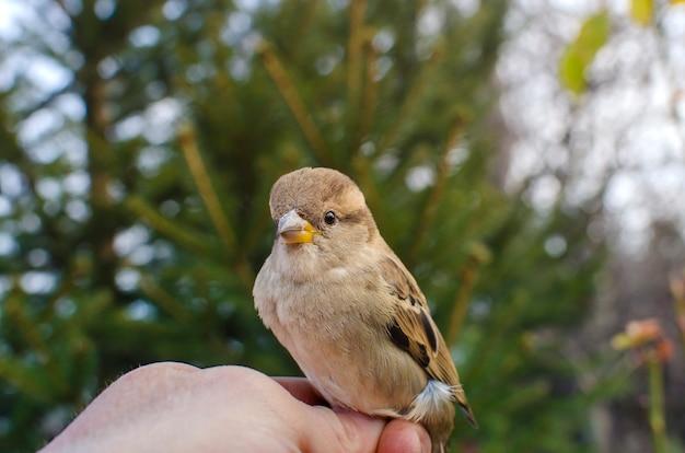 手にスズメの鳥