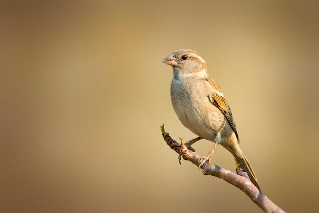 Воробей на ветке дерева. птица. животные.