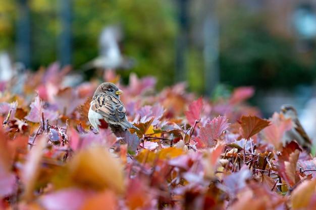 色鮮やかな紅葉に座っているスズメ。美しい秋