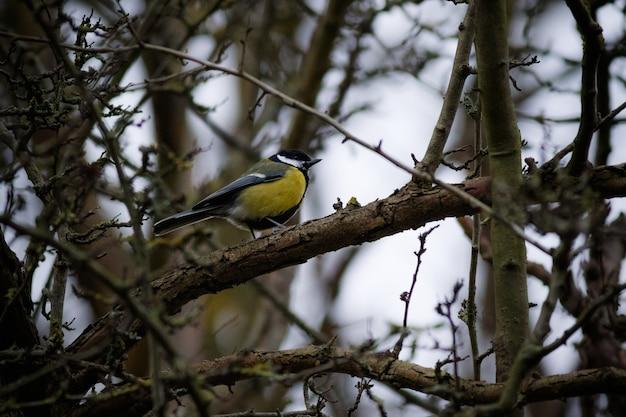 木の枝に腰掛けてカラフルな羽を持つスズメ