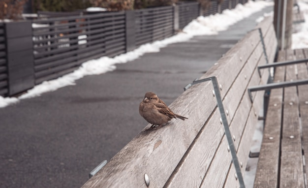 Sparrow on a wooden bench in a park Premium Photo