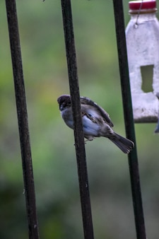 Sparrows eat from the feeder