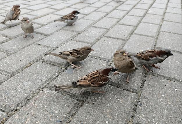 スズメは秋に通りにジャンプします