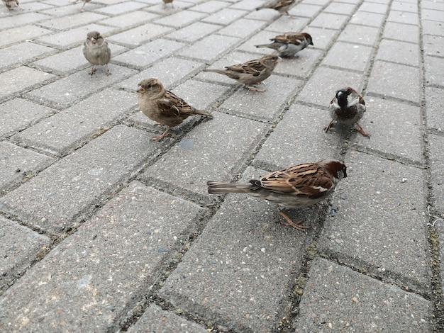 スズメは灰色の秋の通りにジャンプします