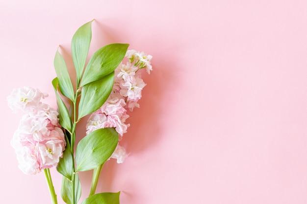 ピンクの紙の背景にコピーのspceにフューカスの小枝とmatthiolaの花のフラワーアレンジメント。母の日、誕生日や女性の日の優しいグリーティングカード。