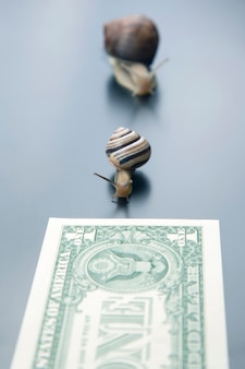 Speed to achieve financial well-being. snails run to the finish line with money. breakthrough and perseverance in the business. business relationship competition metaphor.
