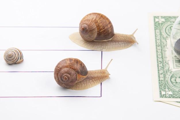 재정적 안녕을 달성하는 속도. 달팽이는 돈을 가지고 결승선까지 달려갑니다. 사업의 돌파구와 인내. 비즈니스 관계 경쟁은 유.