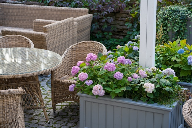 Spend evening on terrace garden cafe or restaurant with wooden wicker chairs and blooming hydrangea