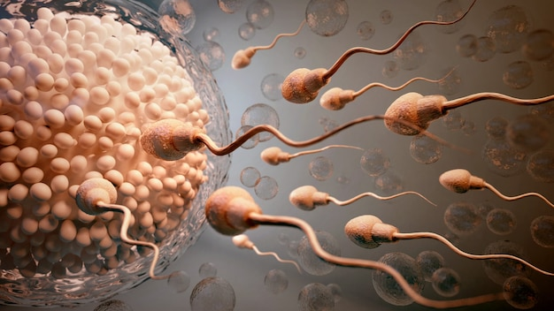 Sperm and egg cell.