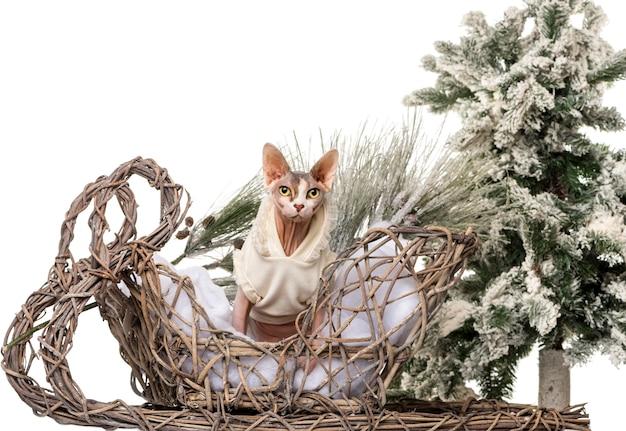 クリスマスの風景の前でスフィンクス