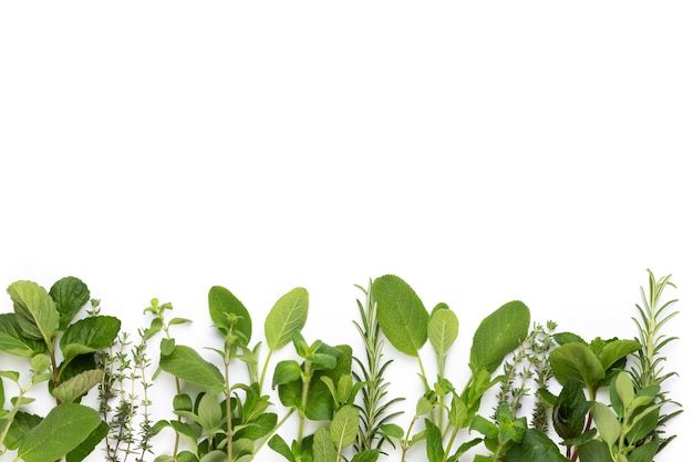 白い表面にハーブの葉と唐辛子をスパイスします。