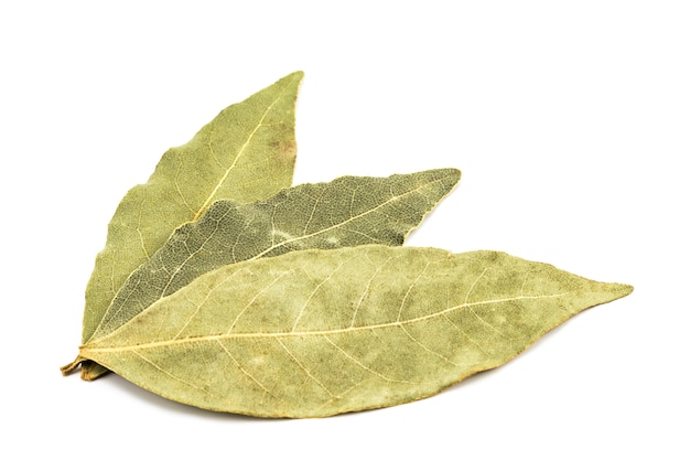 Spices bay leaves isolated on white