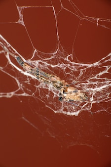 거미, 붉은 배경, 선택적 초점과 대조되는 웹의 아름다운 작은 거미.