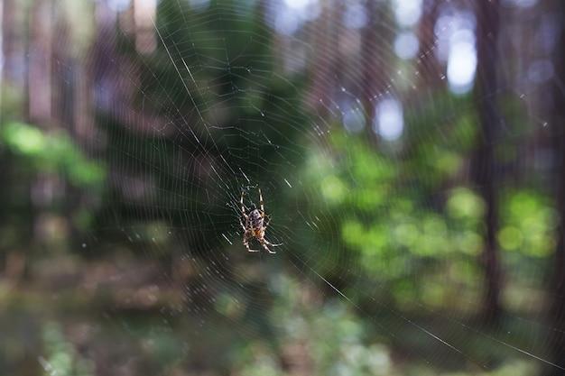 Паук, лазающий по сети осенью