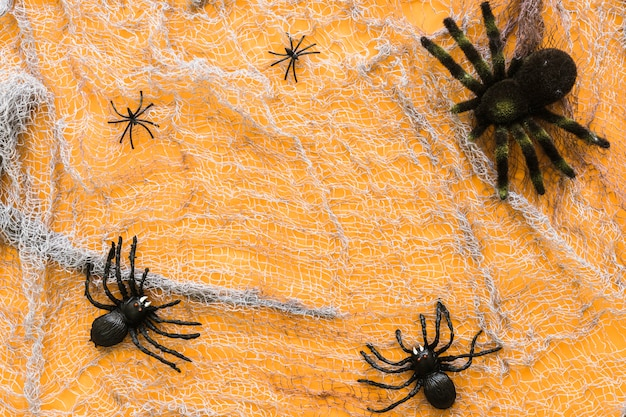 Spider composition for halloween