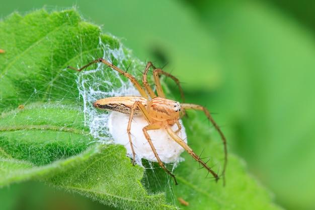 Spider in forest