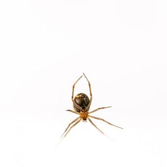 白い背景のクモの巣からぶら下がっているクモ