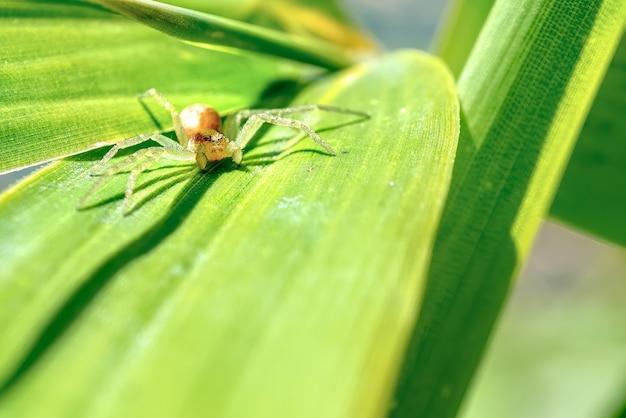 庭で、葉に隠れているクモ