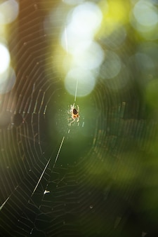 사냥의 숲에서 거미줄을 잡고 있는 거미. 밝은 노란색 태양 빛, 거미 네트워크, 봄철, 야생 자연 개념의 아름다움