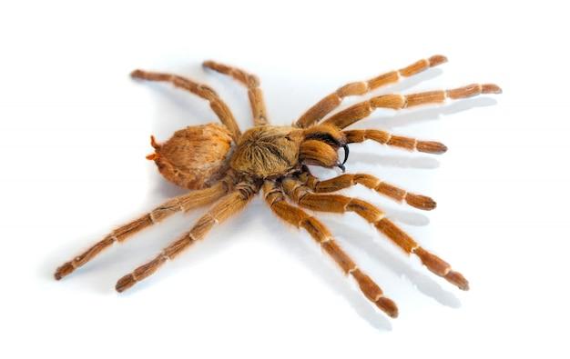 흰색 배경에 거미