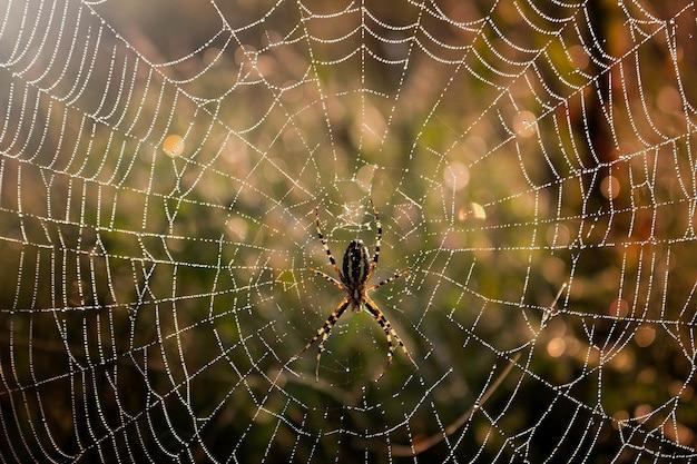 クモの巣の真ん中にあるクモ