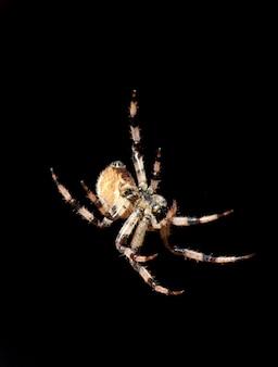검은 배경에 고립 된 거미