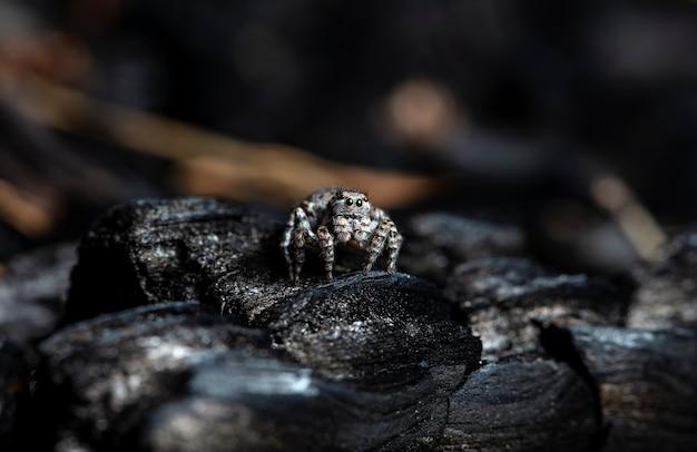 Джемпер с пауком