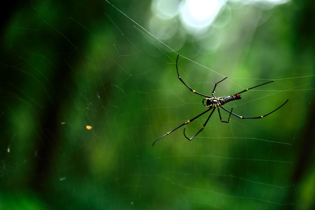 Spider in nature on green background