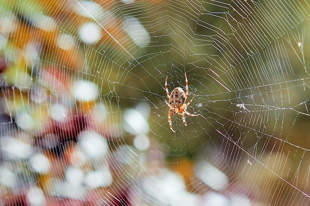 クロスピースの蜘蛛が網を織ります。フェンスの上のクモ
