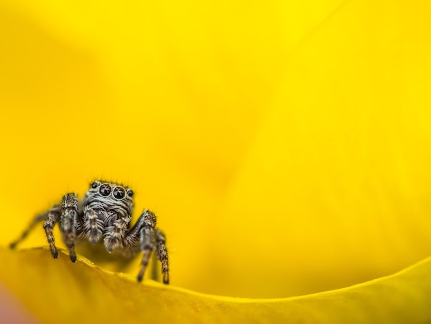 꽃에 거미