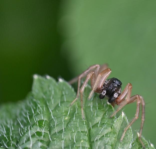 녹색 잎에 거미