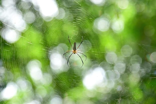 蜘蛛の巣の蜘蛛。