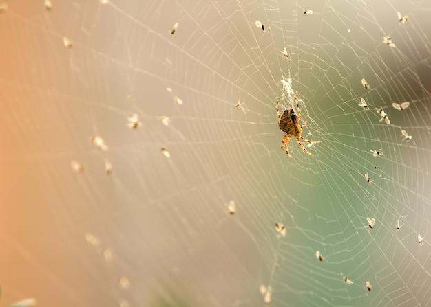 Паук на паутине в окружении своих жертв