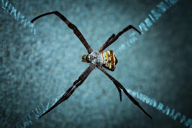 Паук в своей сети ждет муху.
