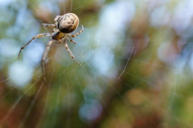 Паук на своей паутине за зеленым фоном