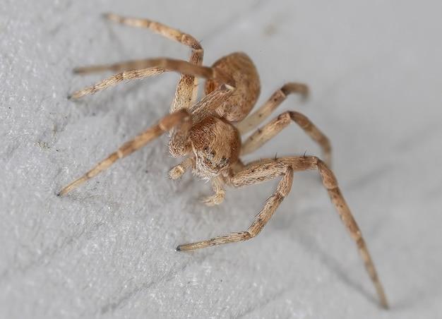 벽에 거미
