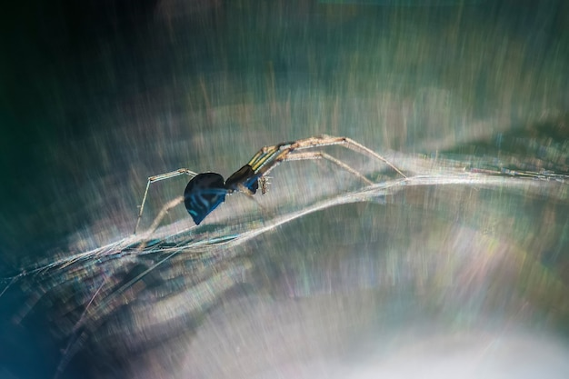 웹상의 거미