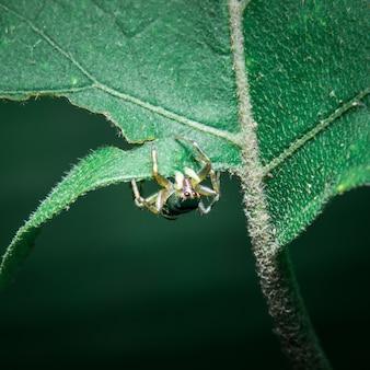 Spider orange on the leaf