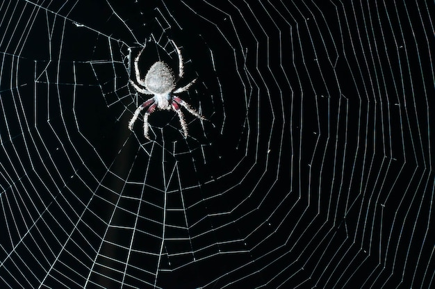 Spider prey at night.