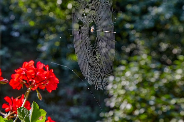 The spider sits in the center of the web