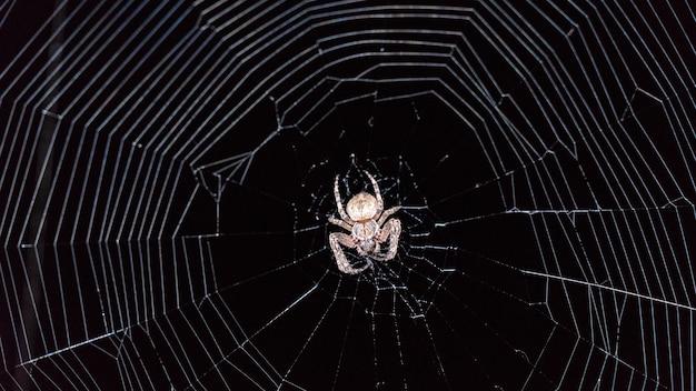 Паук ночью сидит в паутине. черный фон, сочи
