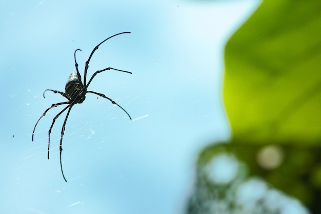 Spider on spider web with green and blu sky background