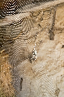 Spider waiting in the center of its web in a barn
