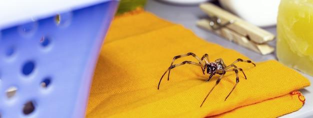 洗濯物の棚の上を歩くクモ、毒のある動物に注意してください